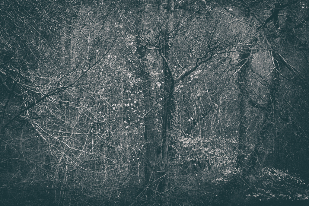 The Secret Language of Trees Week 8, November_20171123_0226.jpg