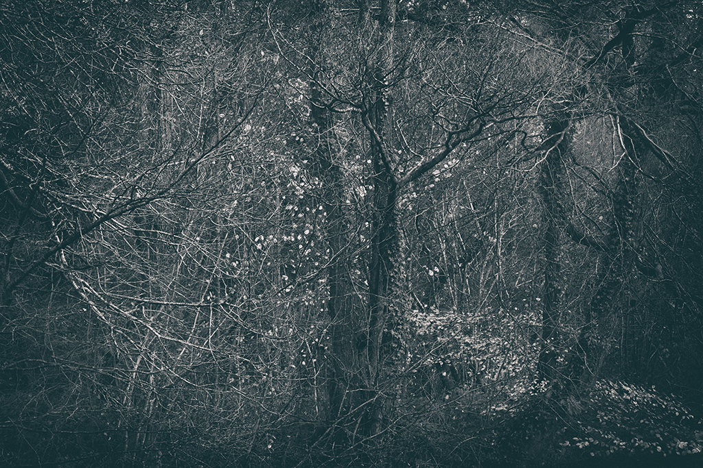 The Secret Language of Trees Week 8, November_20171123_0226BW toned.jpg