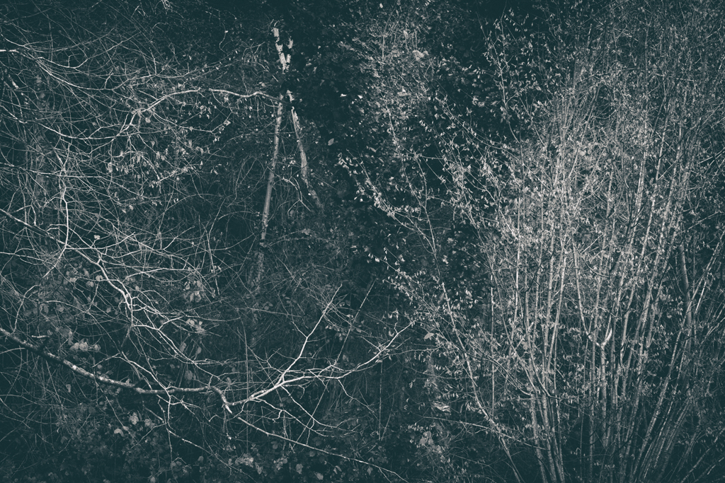 The Secret Language of Trees Week 8, November_20171123_0240_1.jpg