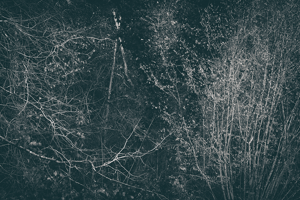 The Secret Language of Trees Week 8, November_20171123_0240_1BW toned.jpg