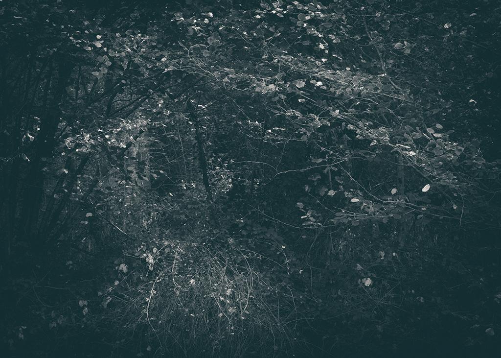 The Secret Language of Trees, week 2 October_20171013_0051_2_1BW toned.jpg