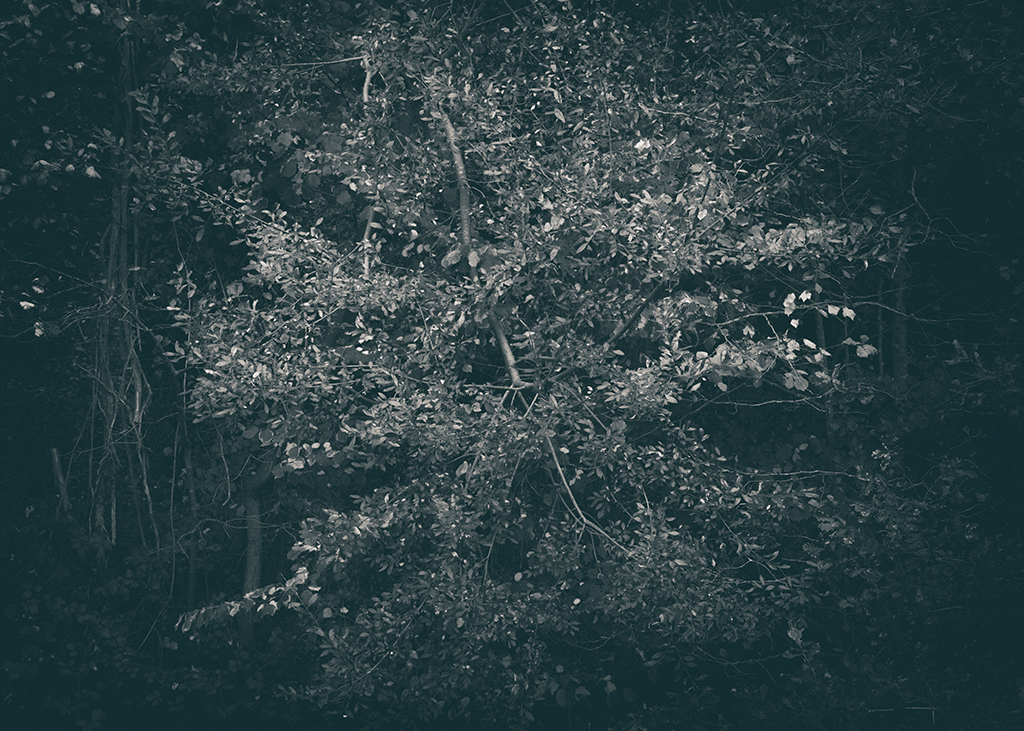 The Secret Language of Trees, week 2 October_20171013_0070_1_1BW toned.jpg