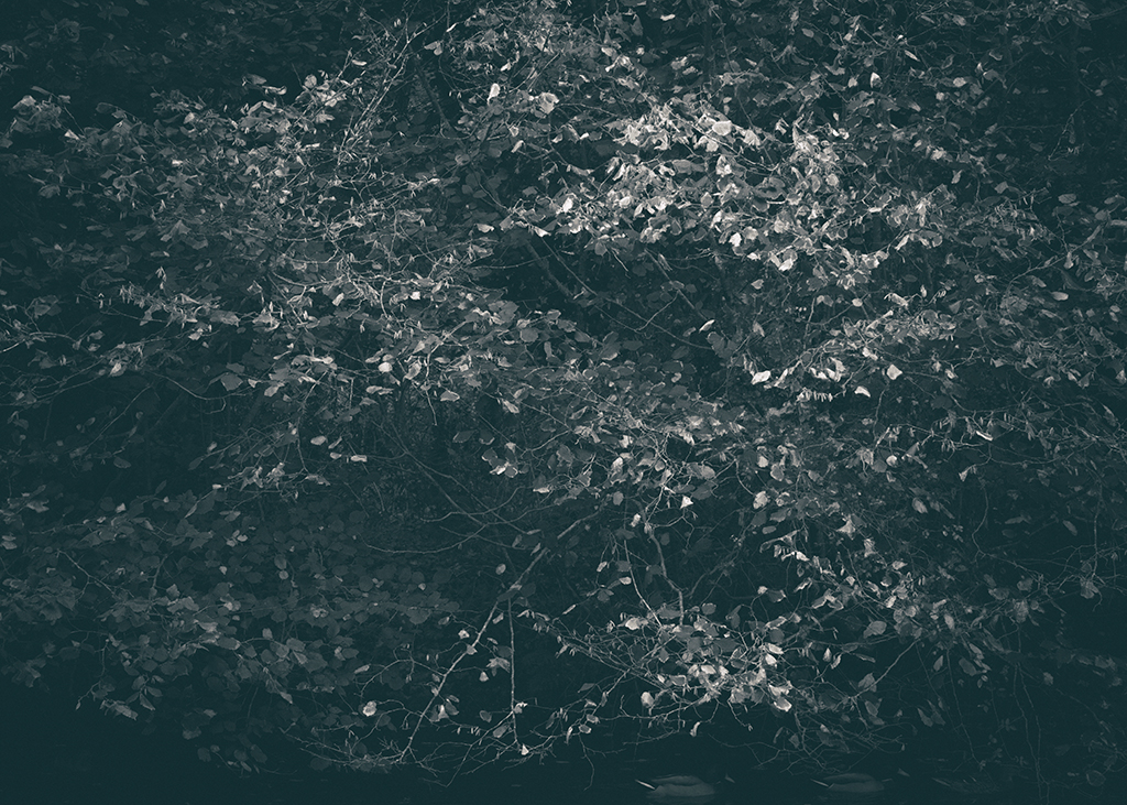 The Secret Language of Trees, week 2 October_20171013_0079_1BW toned.jpg