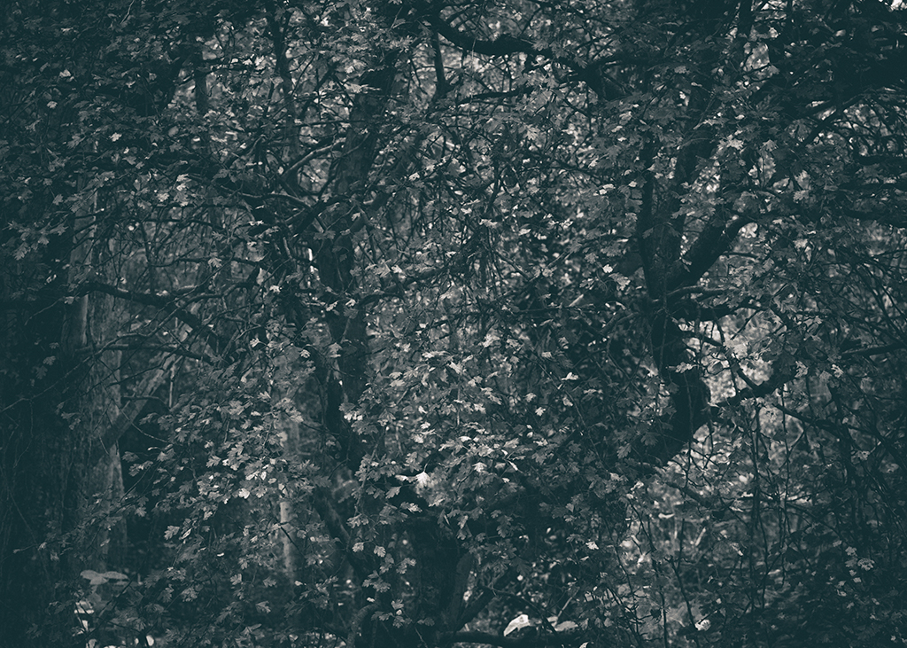 The Secret Language of Trees, week 2 October_20171013_0118_1BW toned.jpg