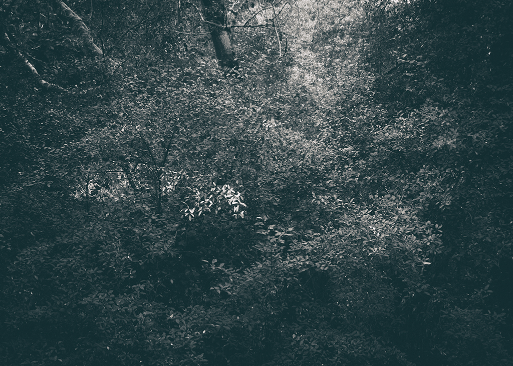 The Secret Language of Trees, week 2 October_20171013_0120_1BW toned.jpg