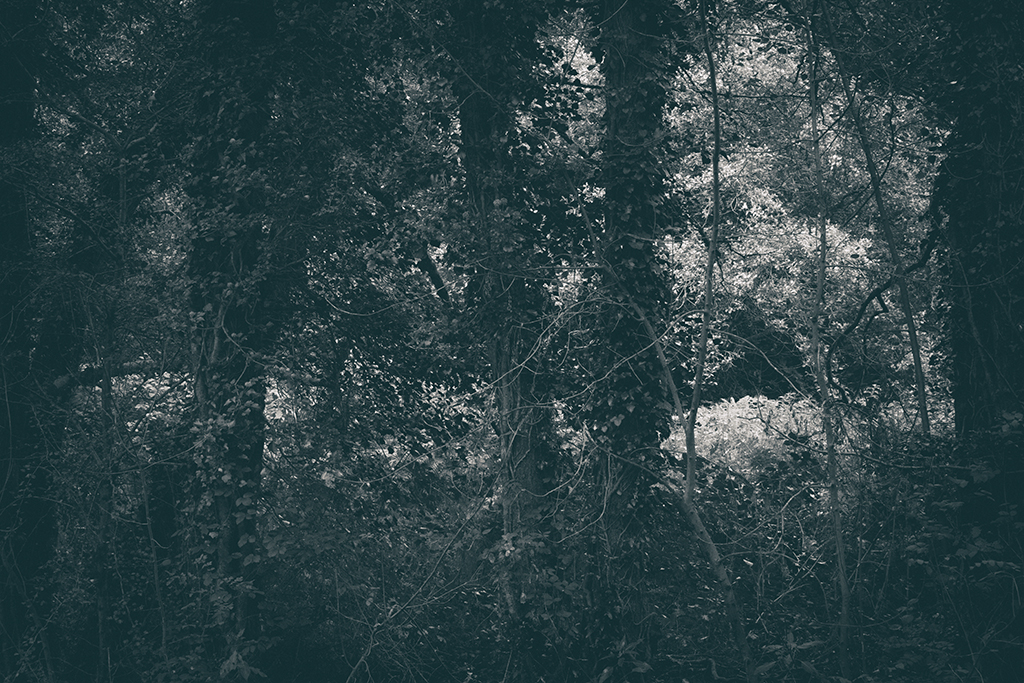 The Secret Language of Trees, week 2 October_20171013_0124_1BW toned.jpg