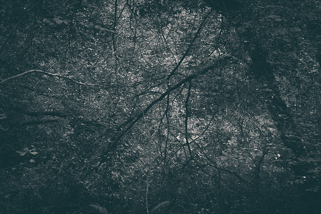 The Secret Language of Trees, week 2 October_20171013_0129_1BW toned.jpg