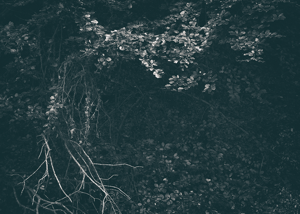 The Secret Language of Trees, week 2 October_20171013_0152_1BW toned.jpg