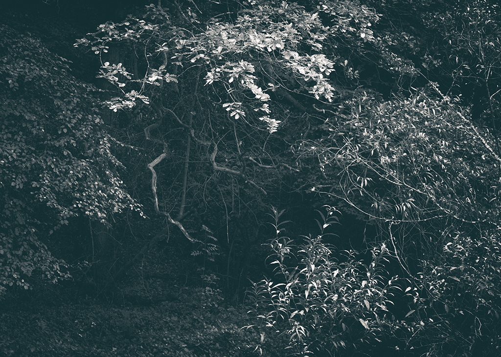 The Secret Language of Trees, week 2 October_20171013_0186_1BW toned.jpg