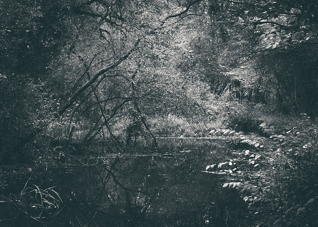 The Secret Language of Trees, week 2 October_20171013_0190_1BW toned.jpg