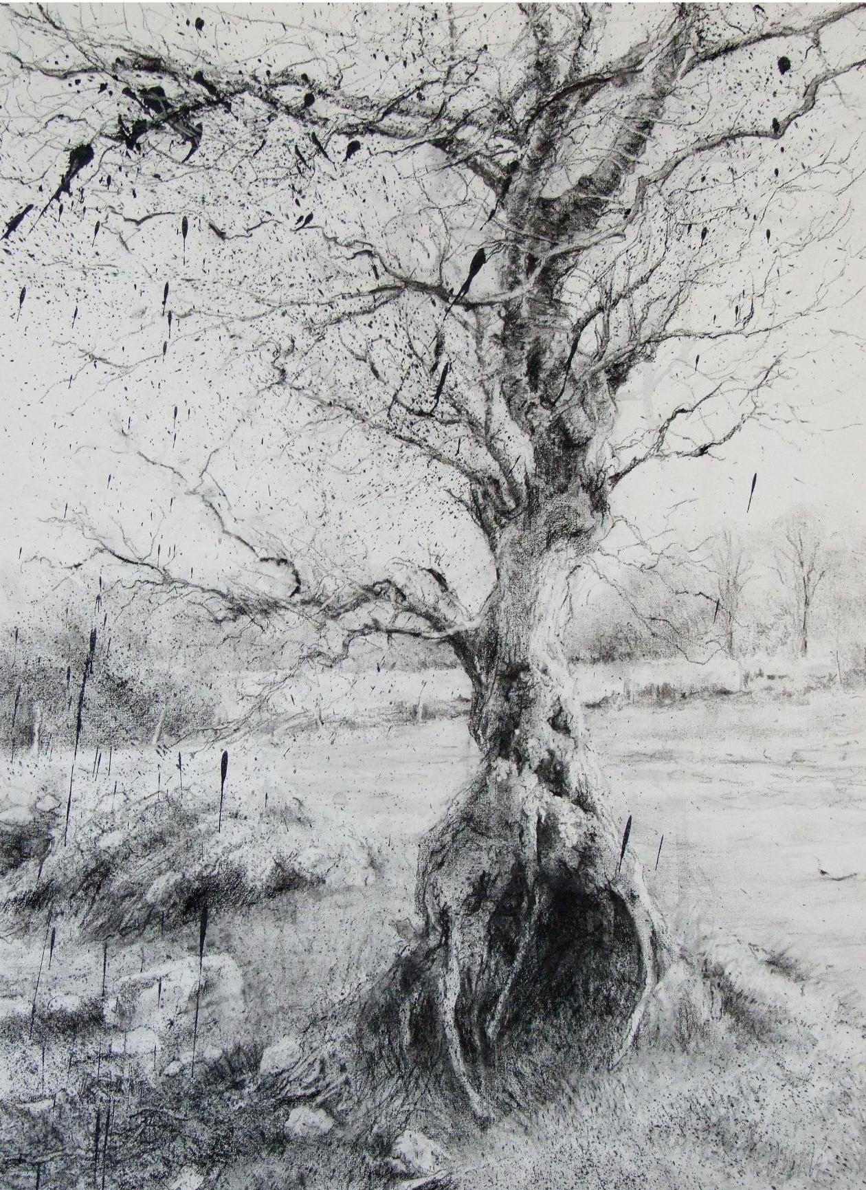 Rain Tree l