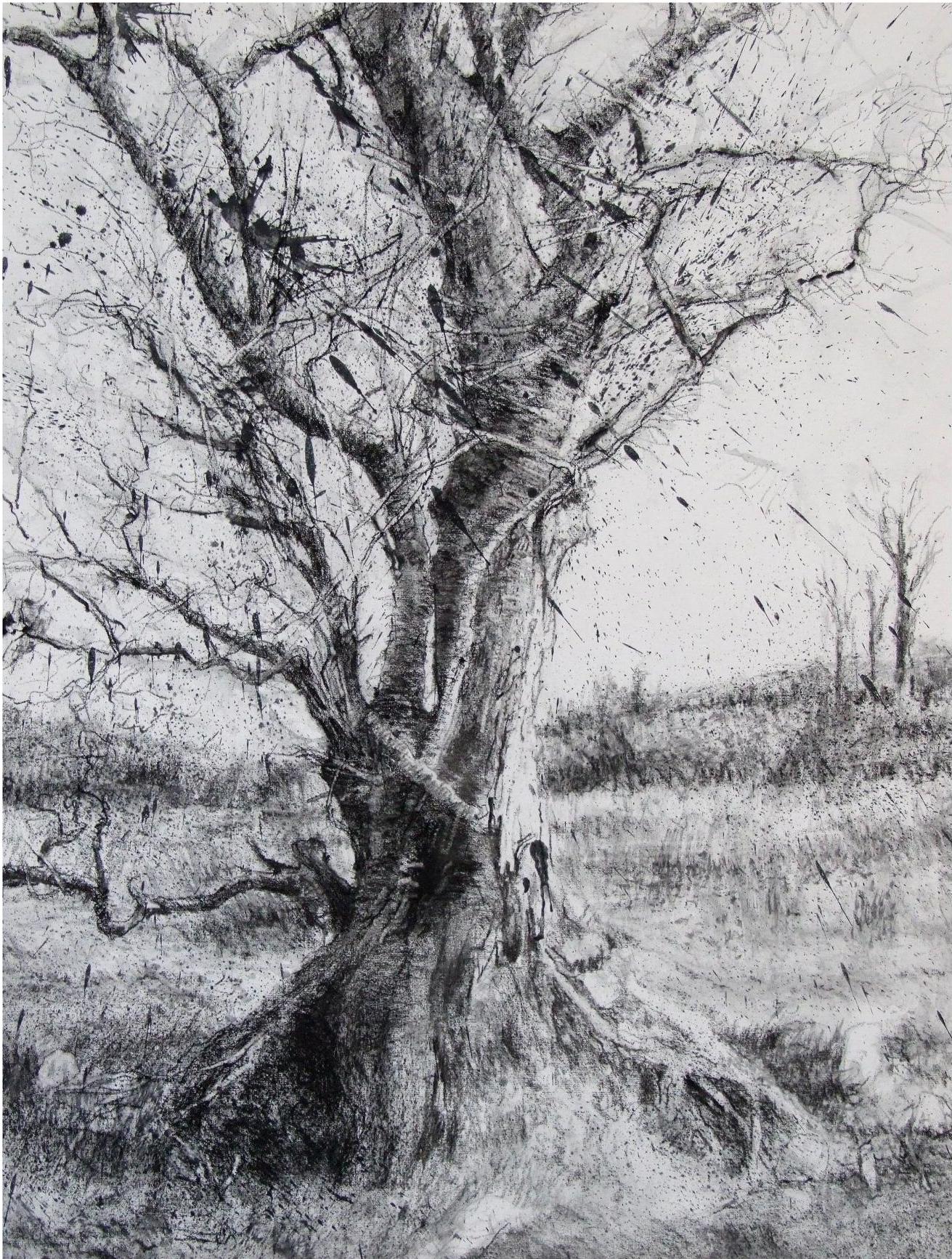 Rain Tree 2