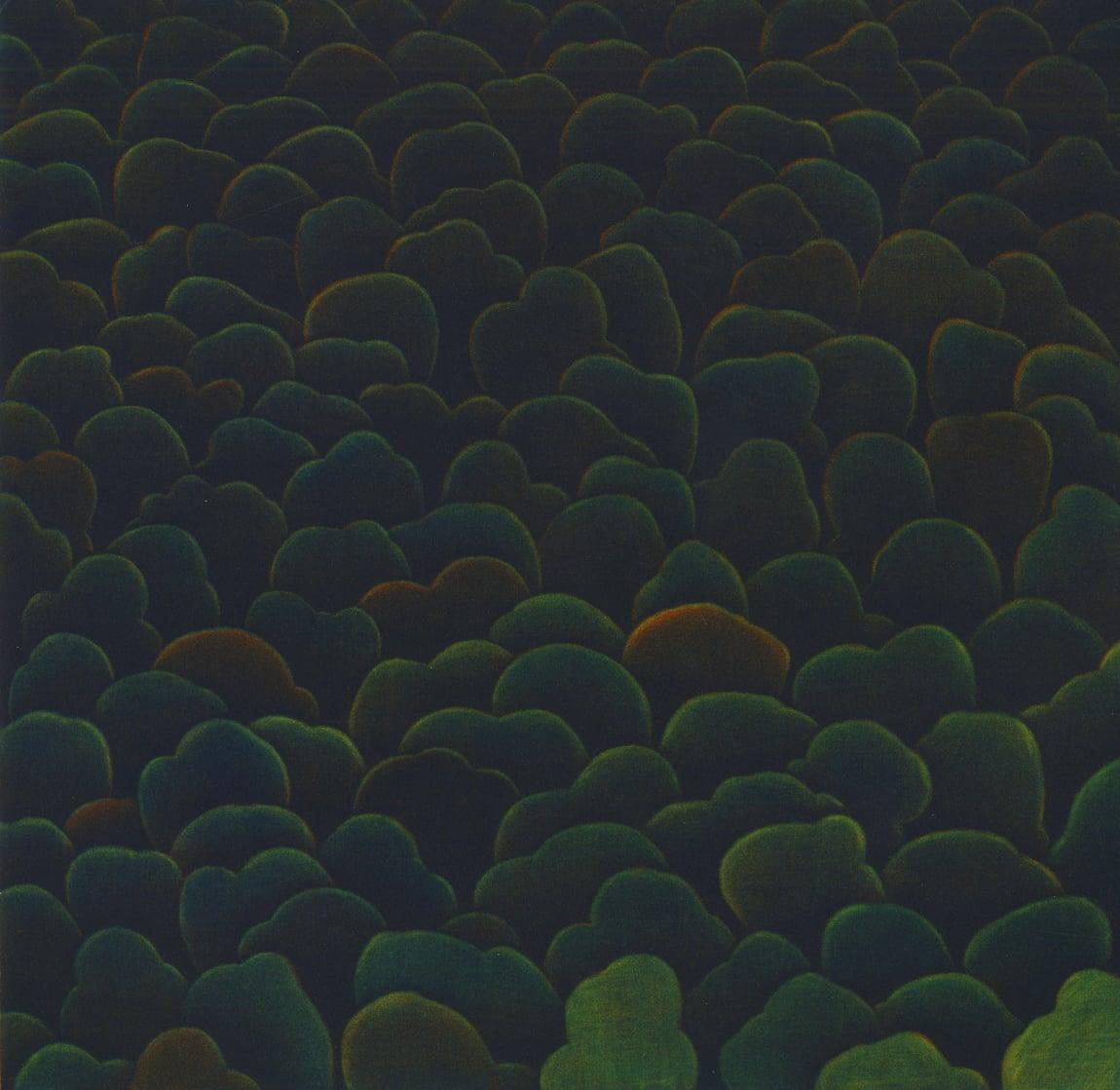 Forest XVl