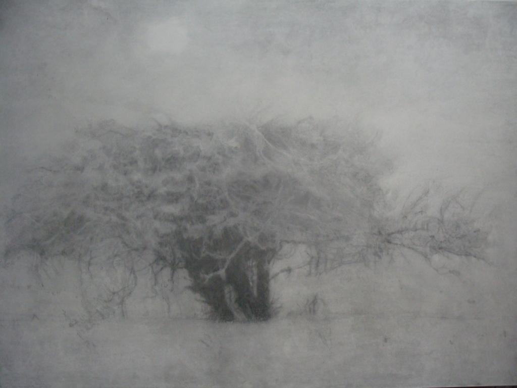 Riverbank, fog
