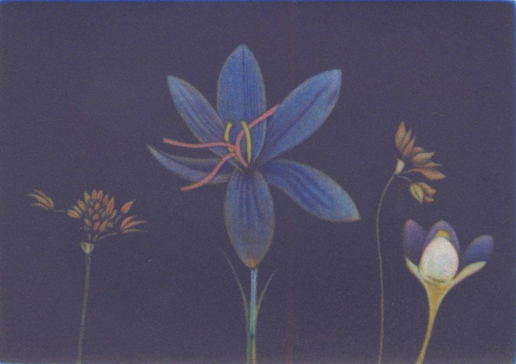 Flowers of Spring II