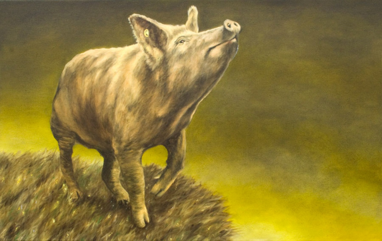 Storm Pig