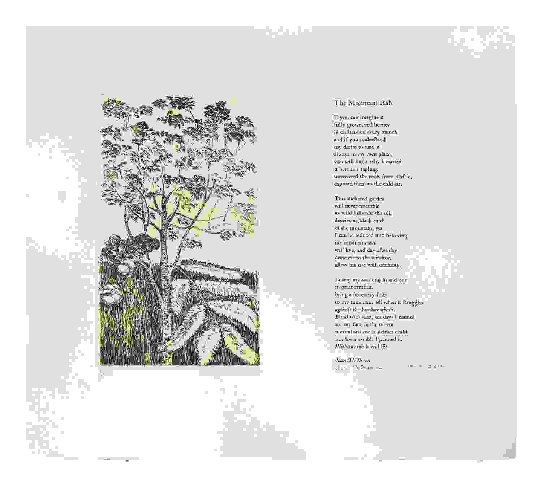 The Mountain Ash broadsheet