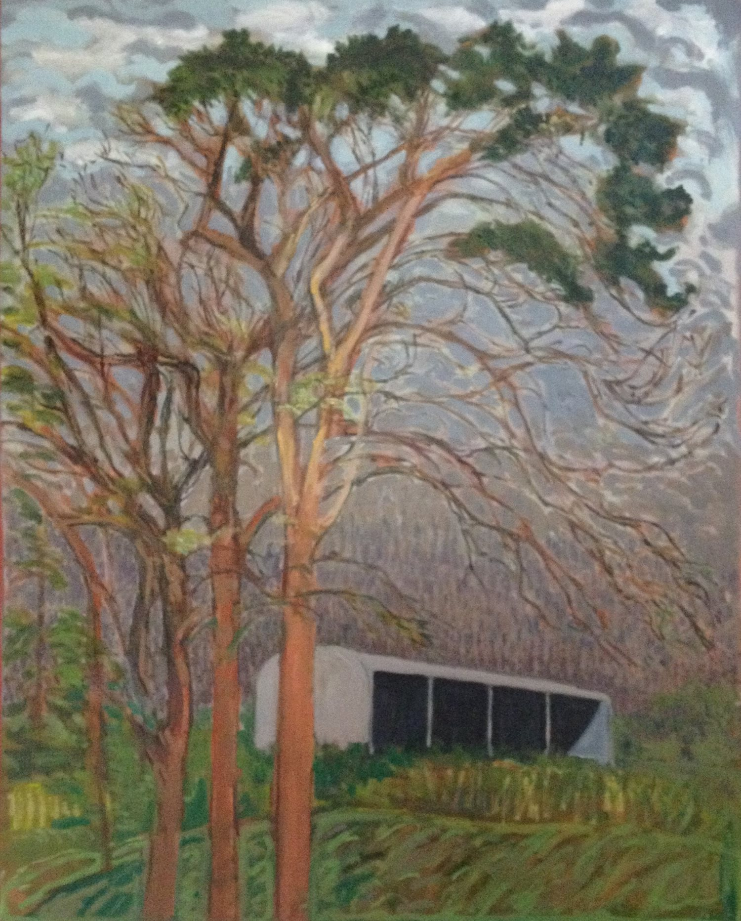 Scots Pine, Wexford oil on canvas 108cm x 92cm by Brian Bourke