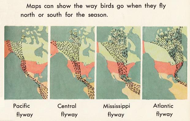 explore-blog :     Gorgeous vintage illustration of bird migration patterns, 1968.