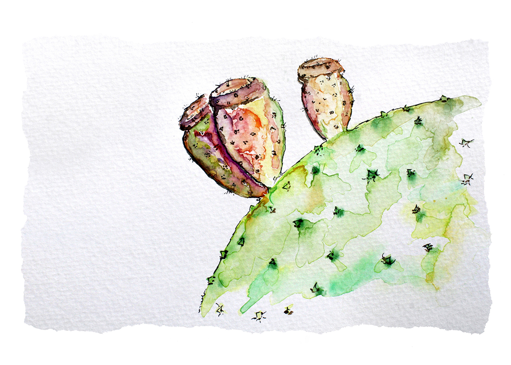 CactusFruit.jpg