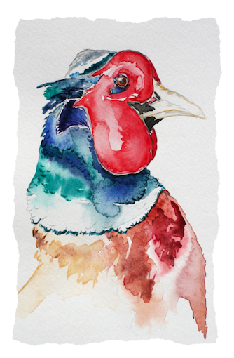 Pheasant.png