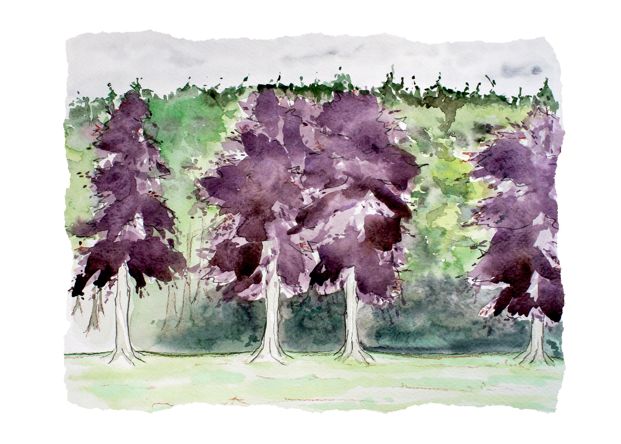 7x5-PurpleForest.jpg