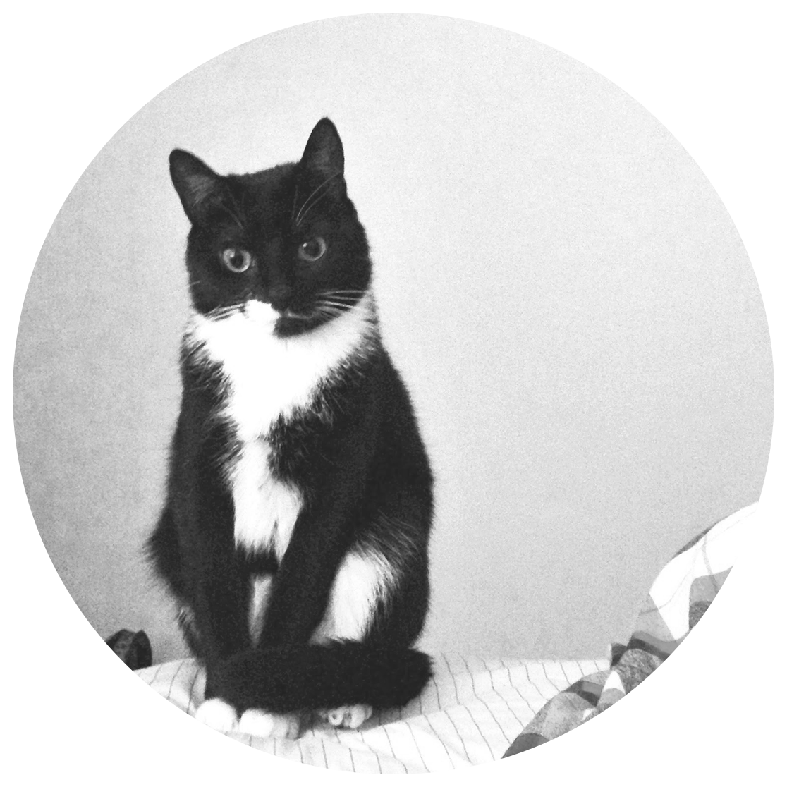 Nala   Nala was born and rescued on the streets of West Philly. She's a sweetie who isn't afraid to take care of business. Don't let her fancy tuxedo coat fool you, she loves a good shoe string or bottle cap. However Nala's current favorite toy is the trusty laser pointer.