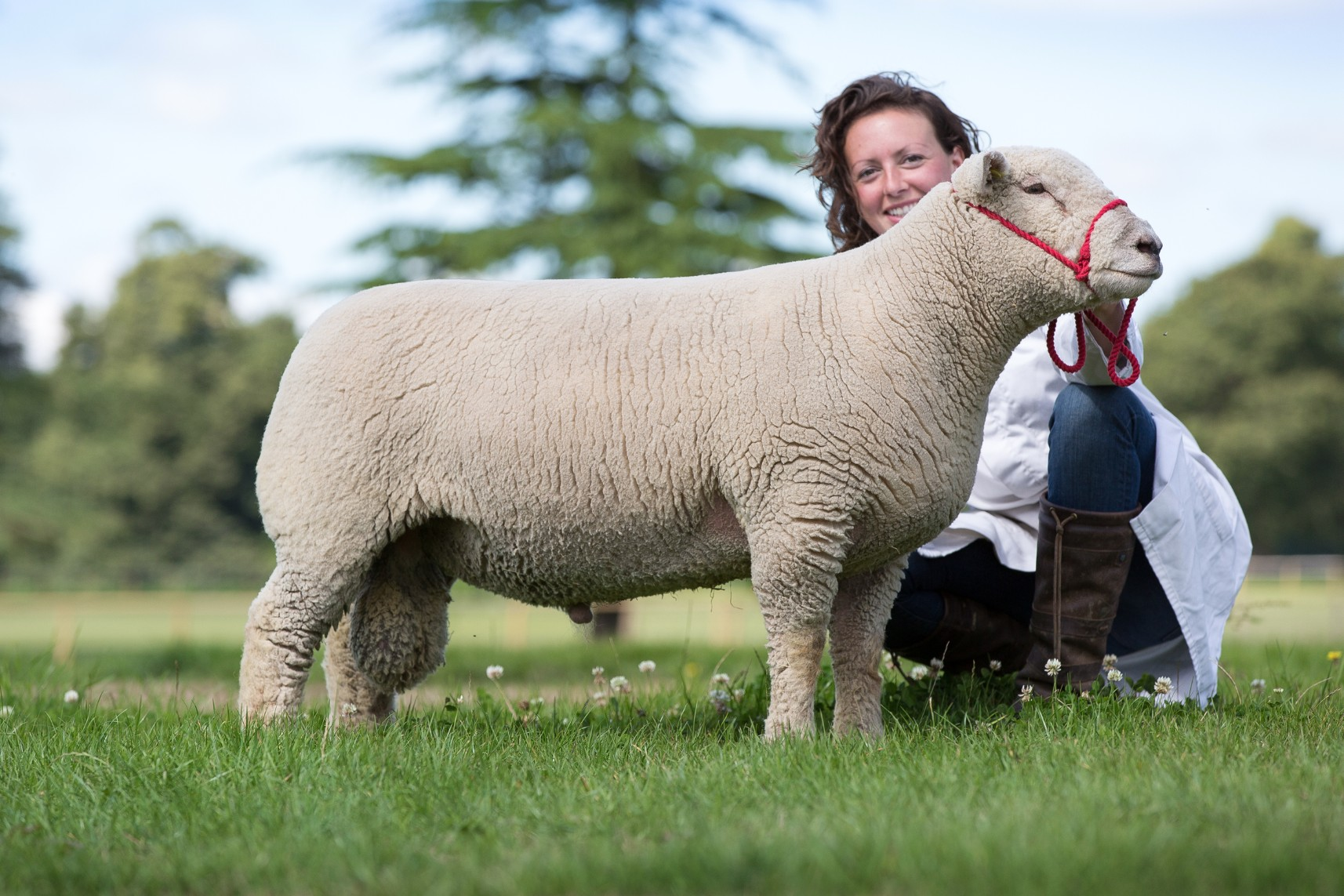 signet performance shearling lamb.jpg