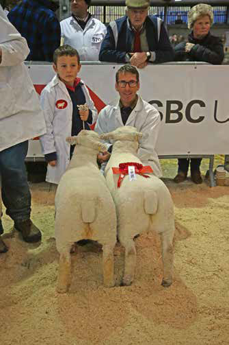 First prize pair of Southdown lambs bred and exhibited by D. S. & P. Humphrey at the 2018 Royal Welsh Winter Fair