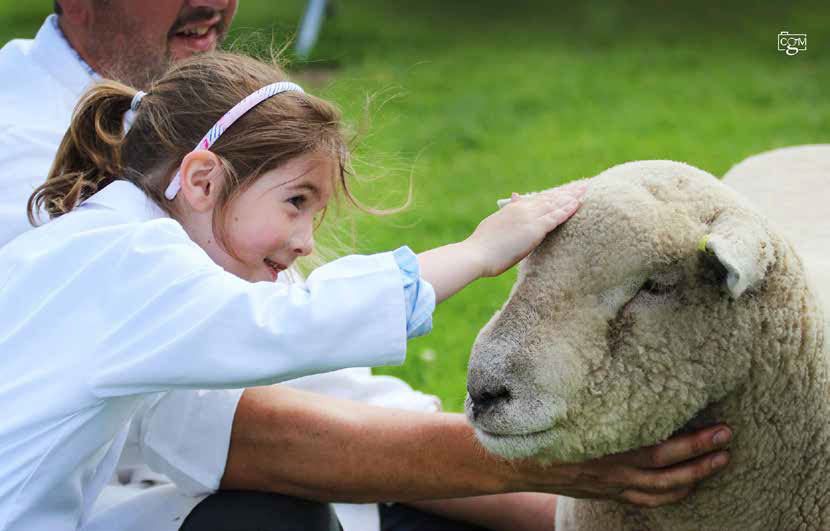 Alex's granddaughter Sophie is the fourth generation of the family to be involved with the breed, following the foundation of her own Littlebrook flock last year.