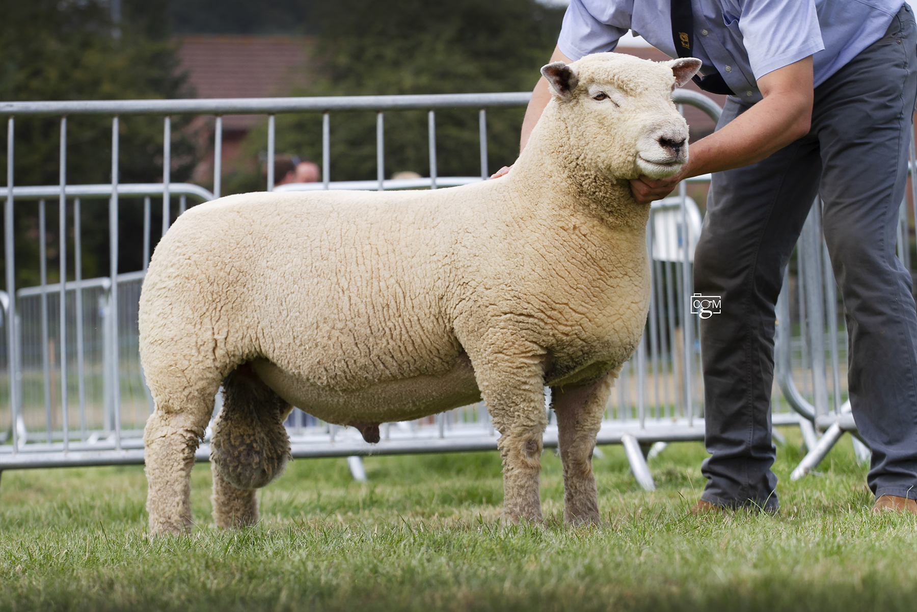 Leading Southdown trade at Worcester on Saturday was a shearling ram, Chaileybrook 18/00297, selling for 900gns.