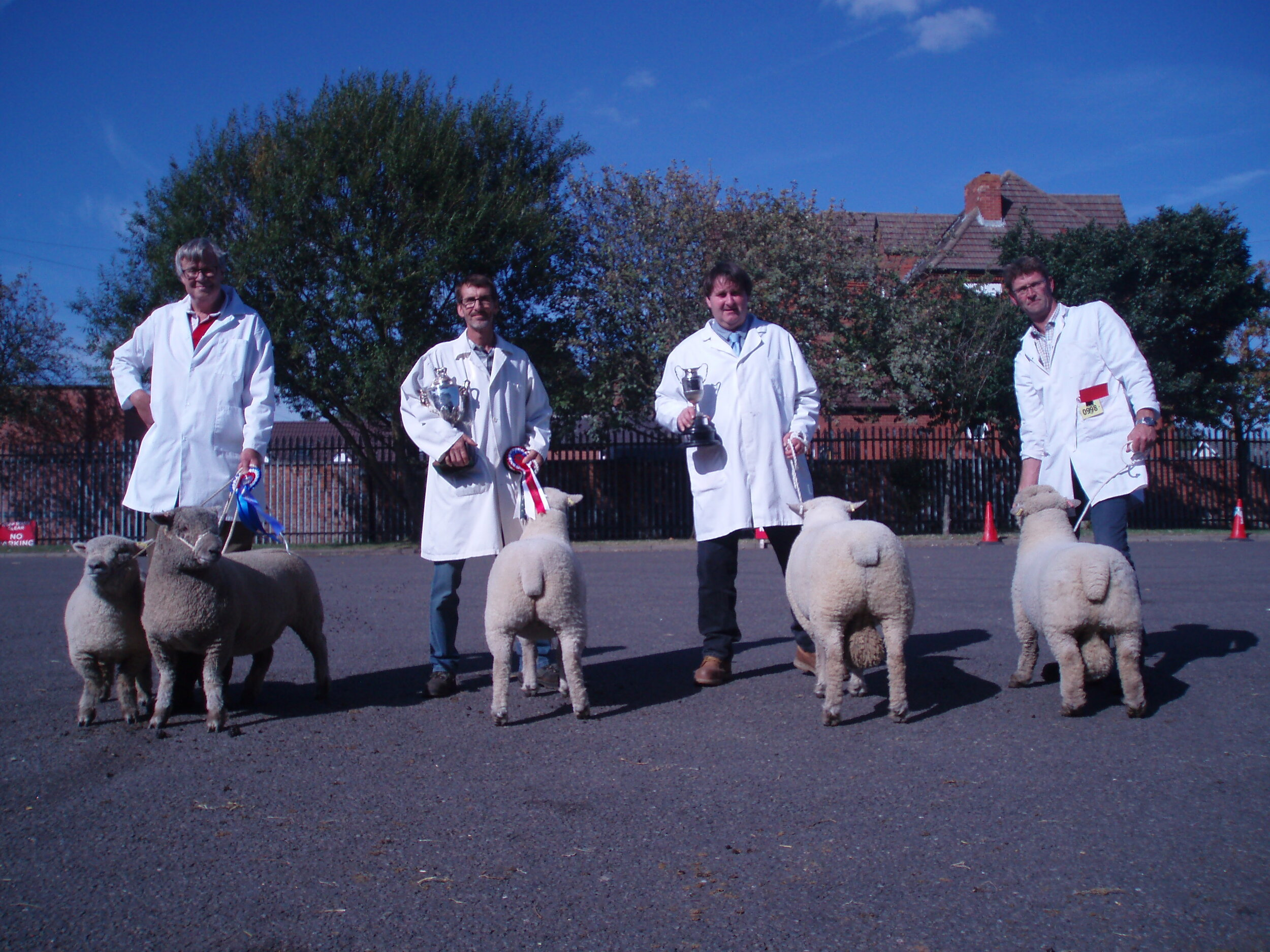 The first prize winners in the show. Left to right: P Goldsworthy – ewe lamb, and Reserve Champion second placed shearling ewe, D, S & P Humphrey's Champion shearling ewe, and shearling ram and Ben Slack's ram lamb.