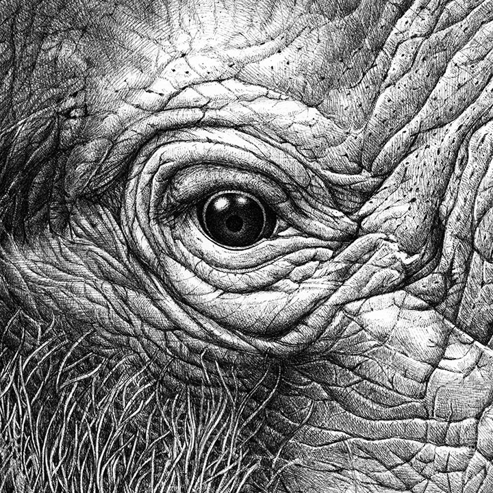 maja sereda elephant eye close up.jpg