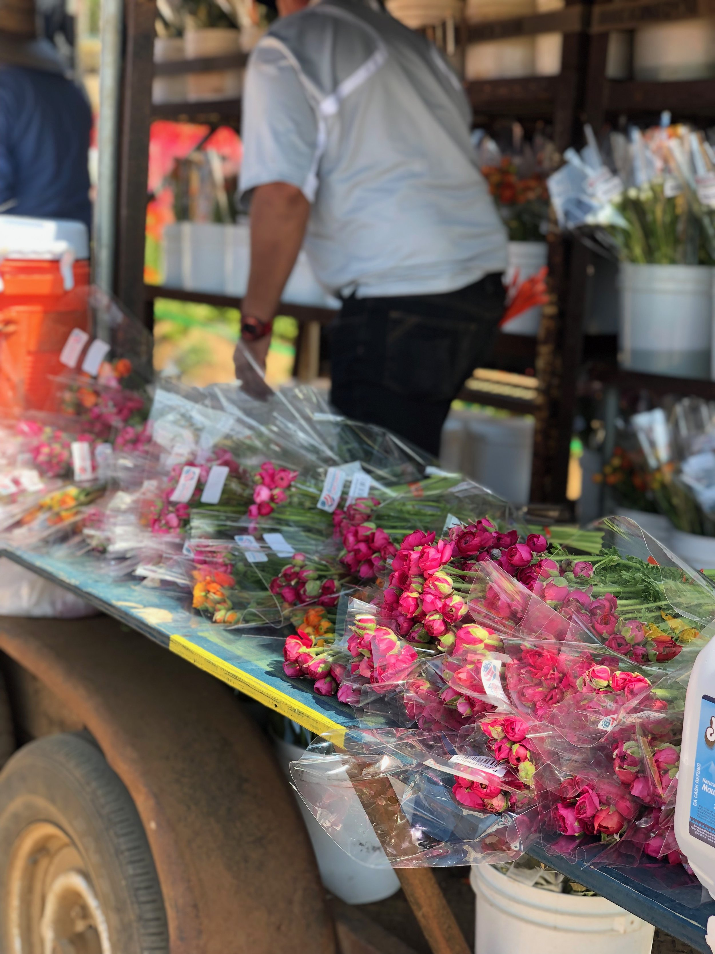 Take some flowers home! - A portion of the flower crop at The Flower Fields is sold as cut flowers at the Armstrong Garden Center.