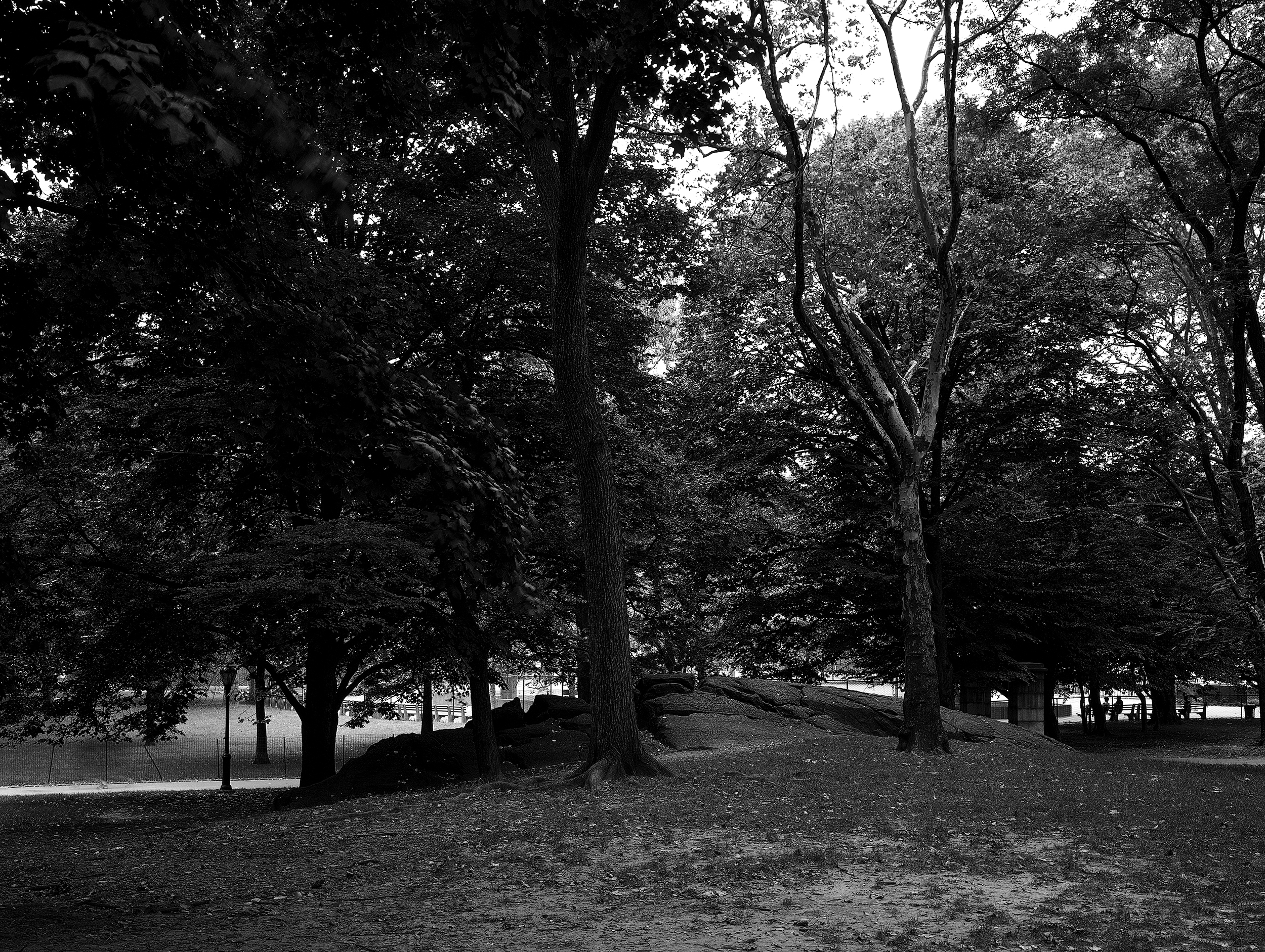 Trees at Central Park New York 2000.jpg