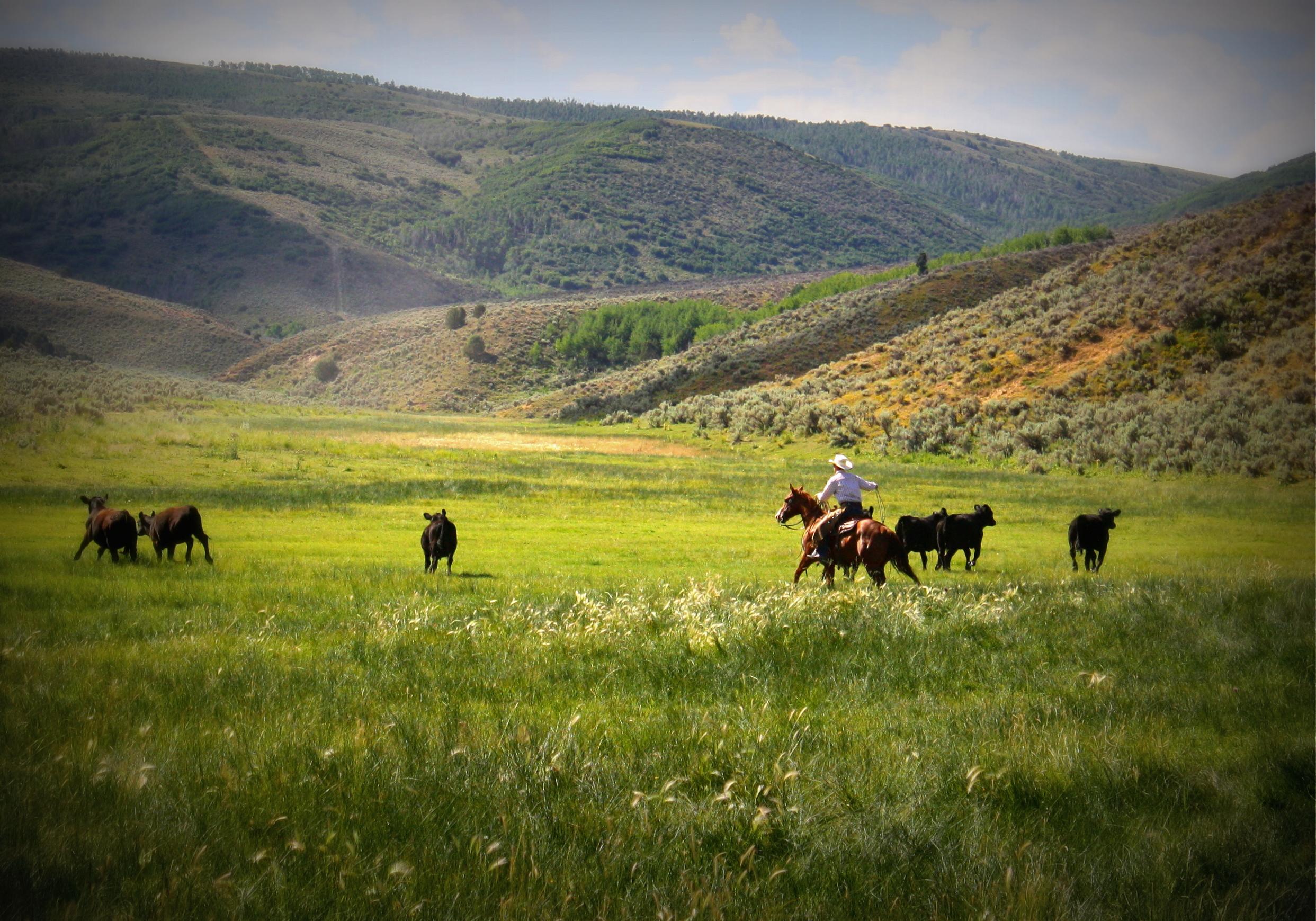 ranch scene.jpg