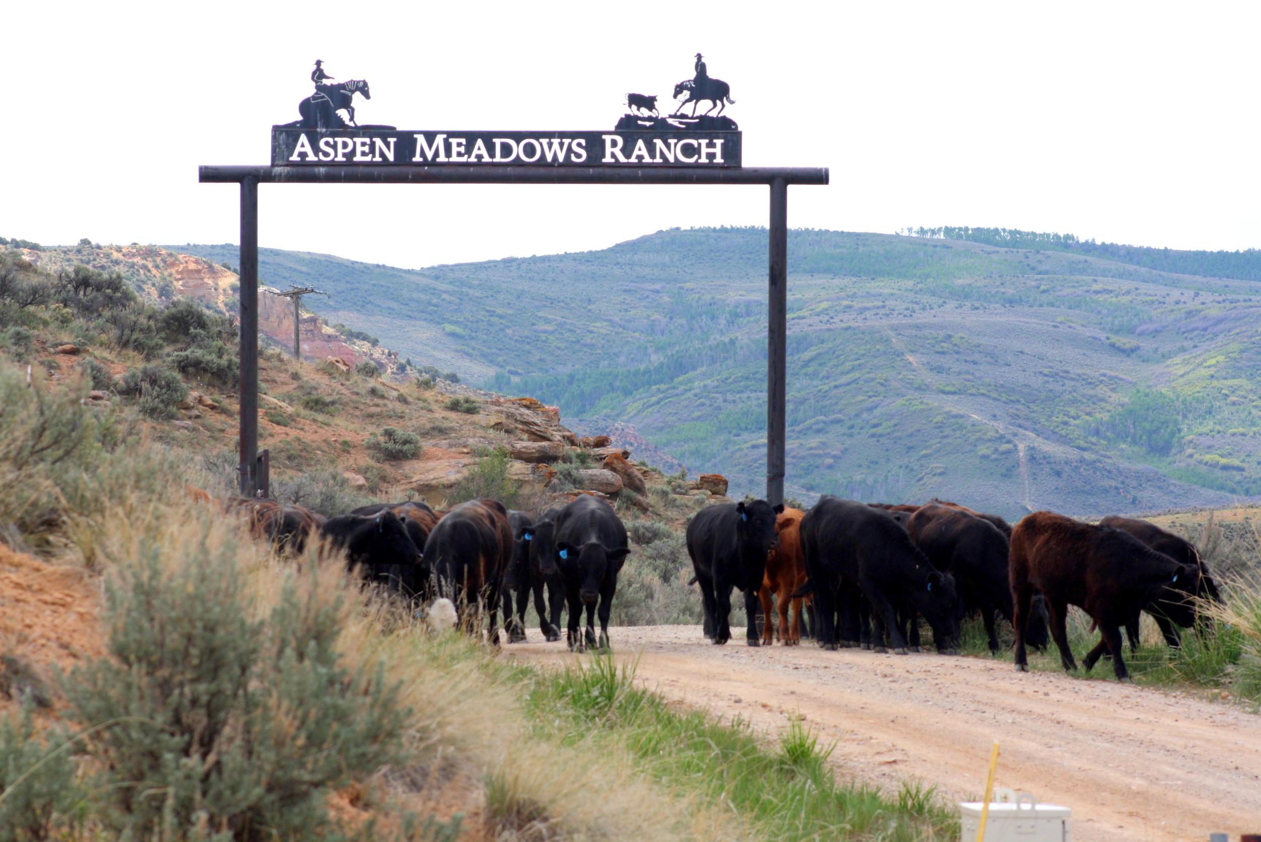 aspen meadows archway.jpg