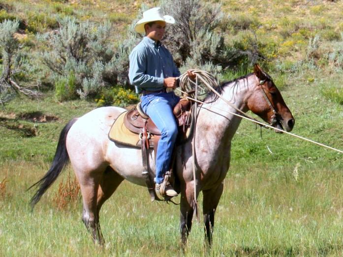 Emmett Horse.jpg