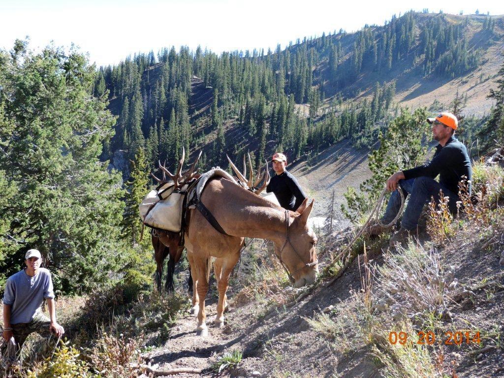 wy deer with oby mule.jpg