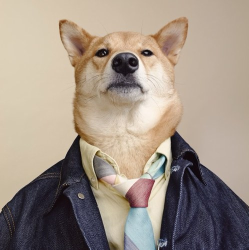 mensweardog.jpeg