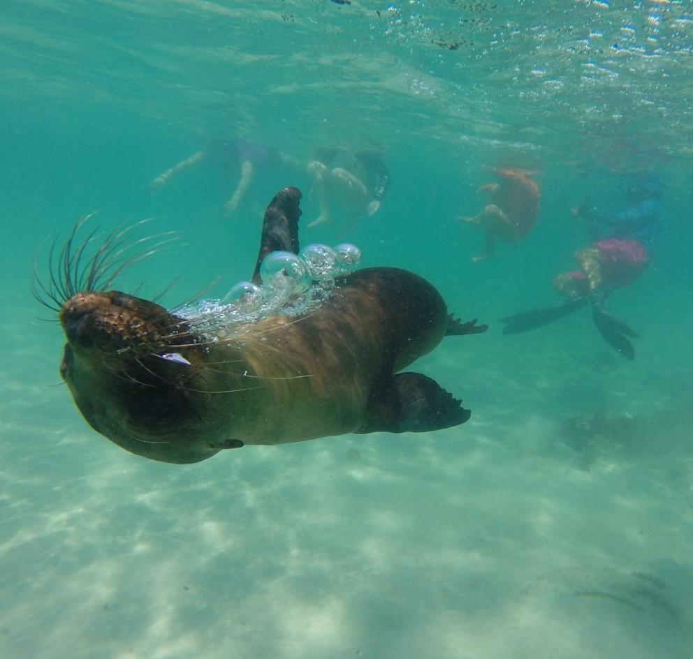 Isabela ISland, Galapagos islands. PHoto by Victoria Bastian