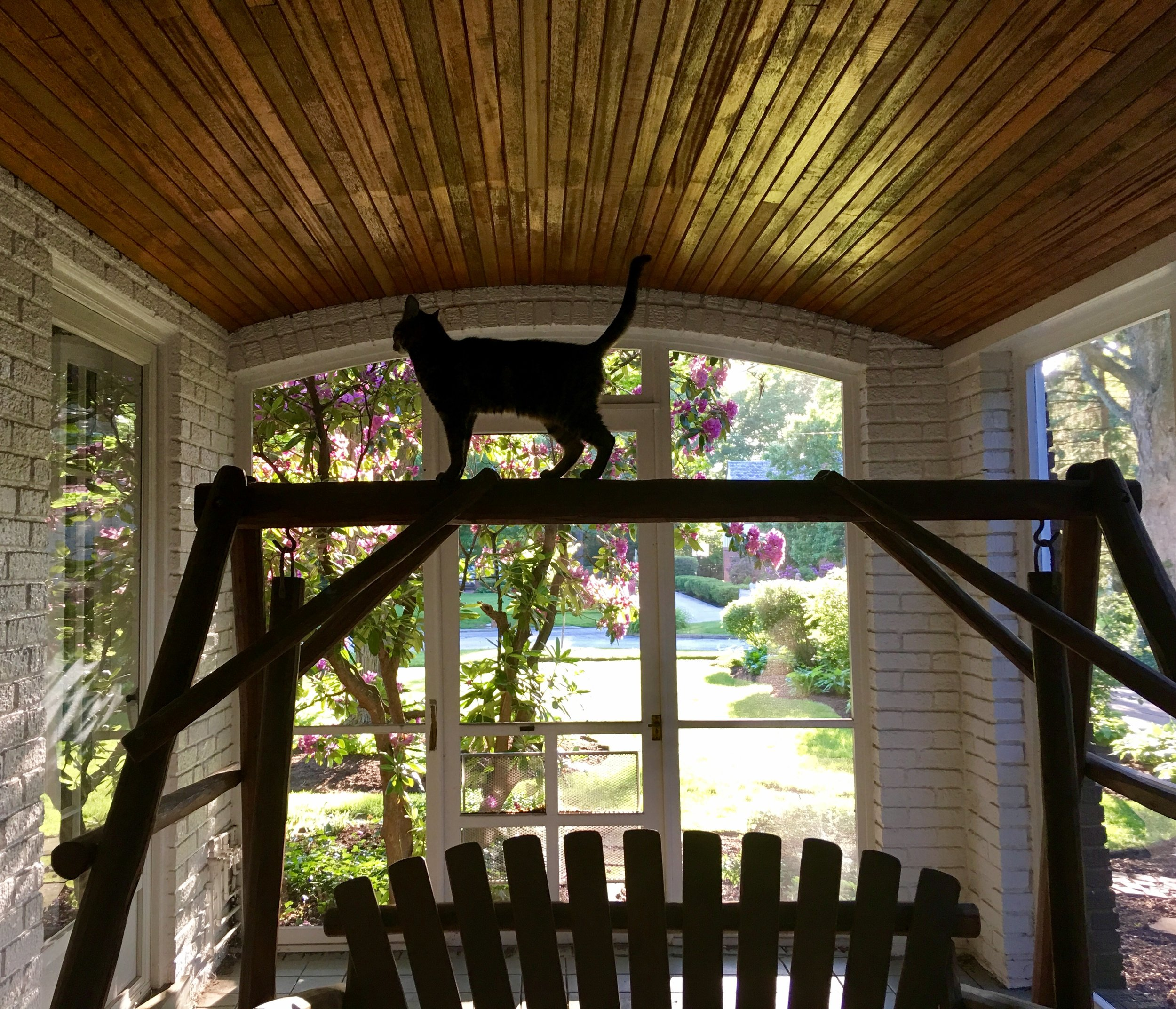 Lily Belle is my familiar. She sits in on spiritual direction...especially when folks want to meet on the porch.