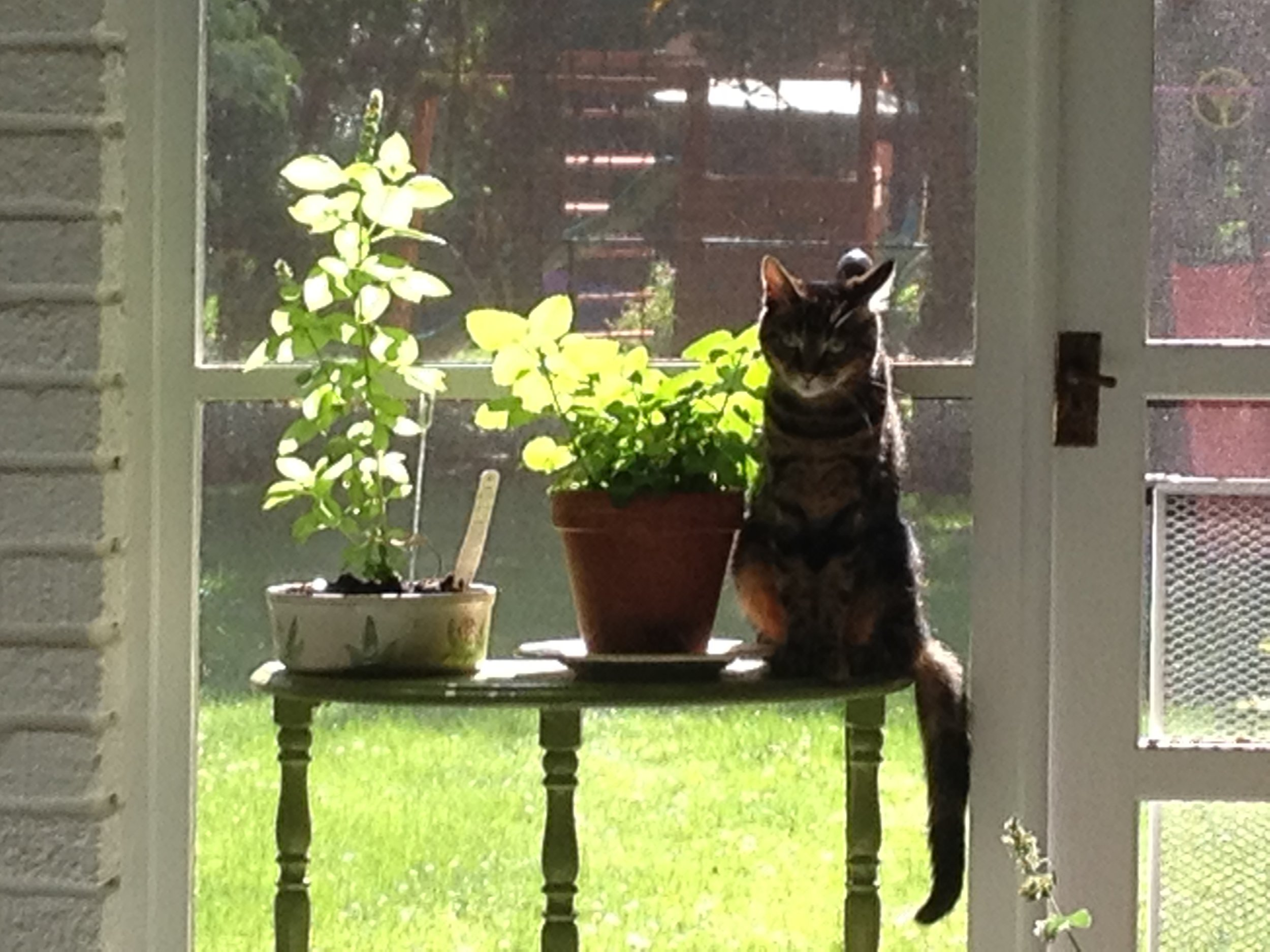 Lily Belle with the old pots, before somebody knocked one off and taught me, again, about impermanence.