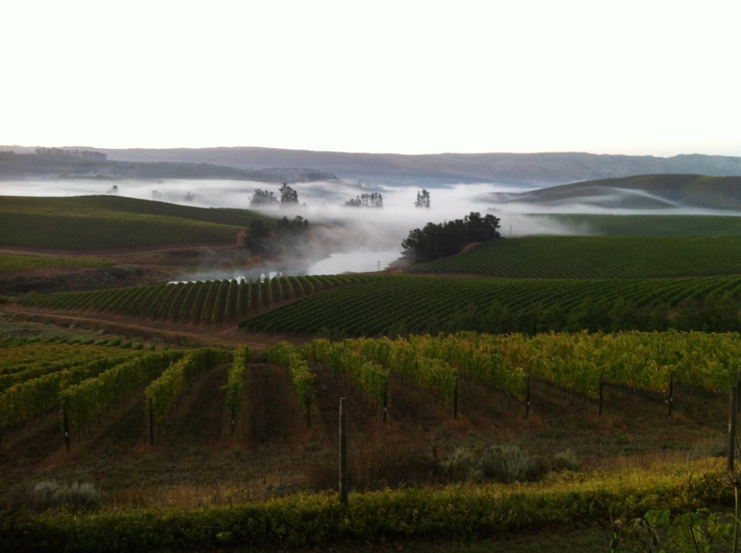 Vineyard Mist.jpg