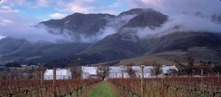 tamboerskloof vineyards.png