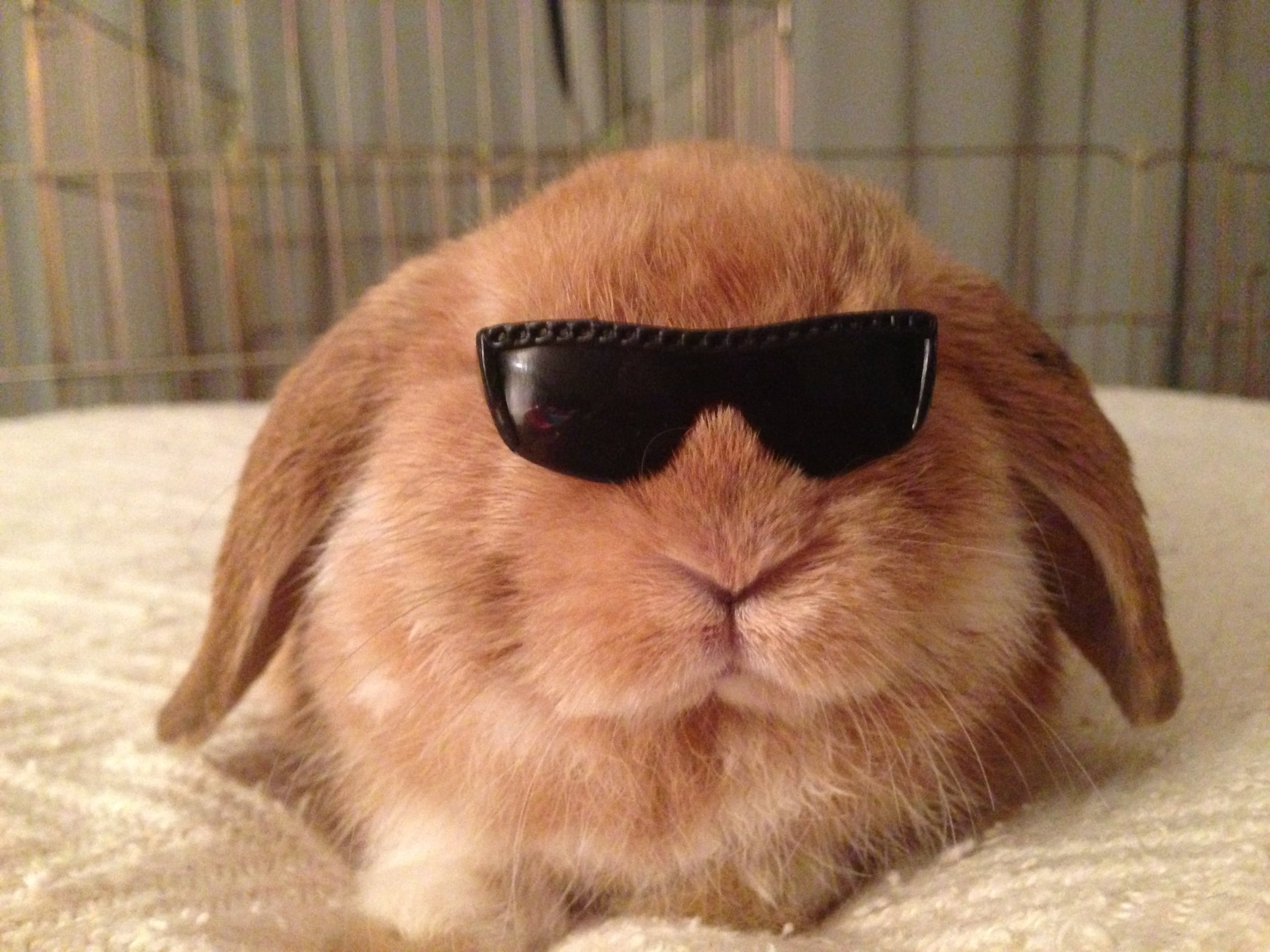 Rock'n Roll Rabbit