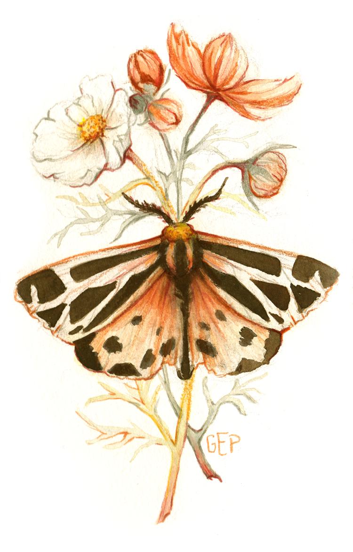 wings-petals.png
