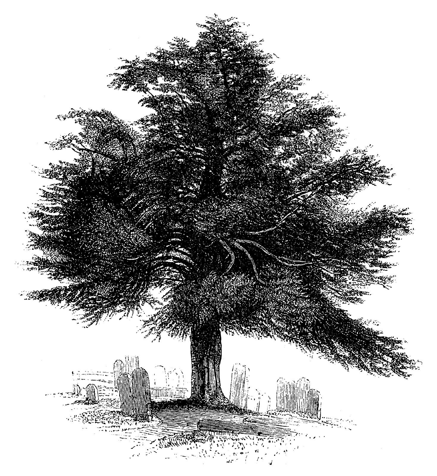 art-genealogy.jpg