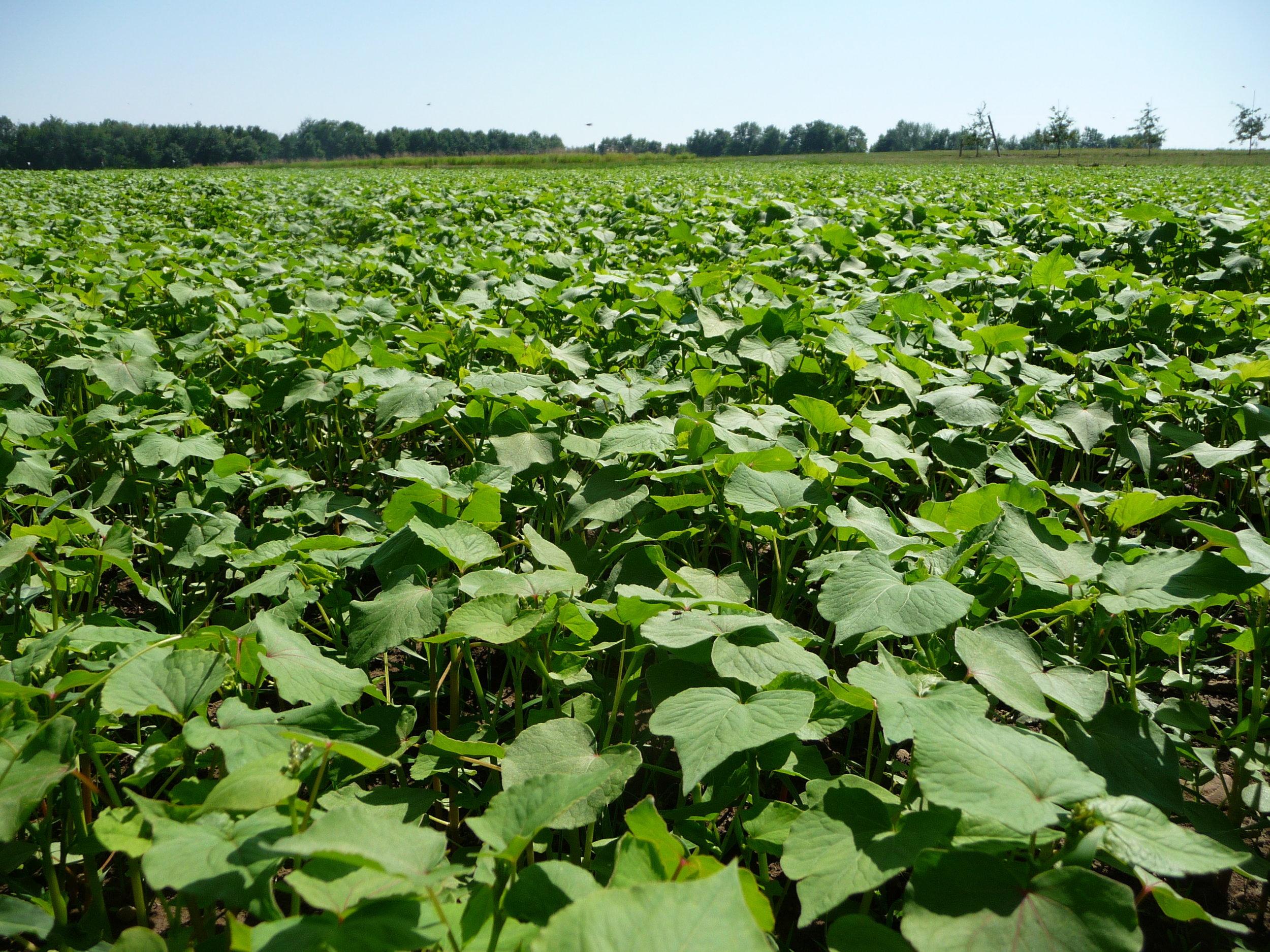 cover-crops-2-26b0jcv 2.jpg