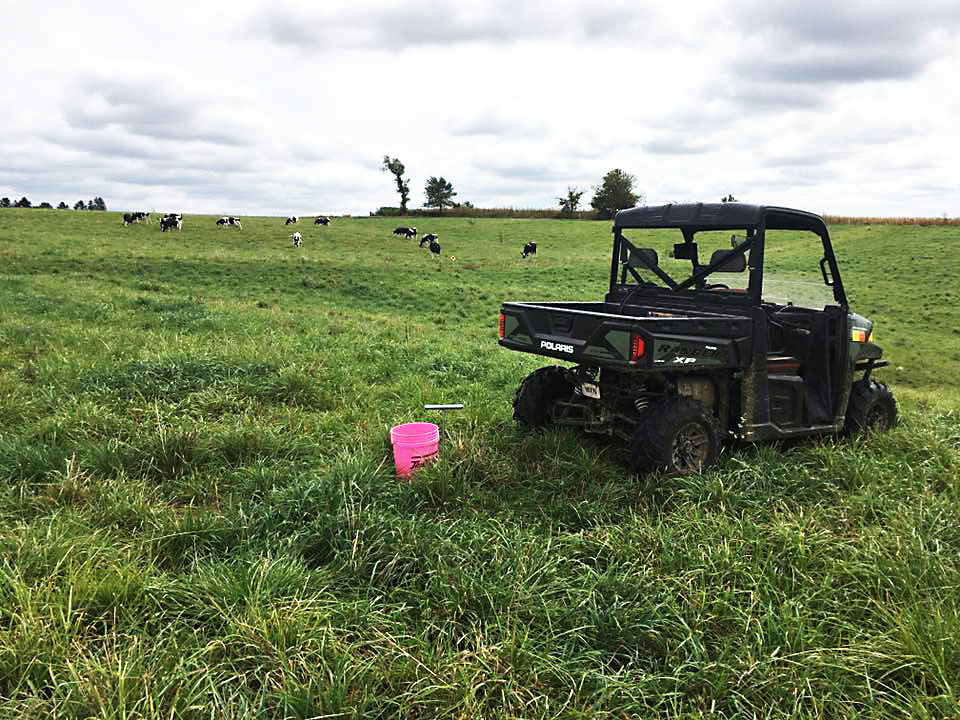 soil sample cows.jpg